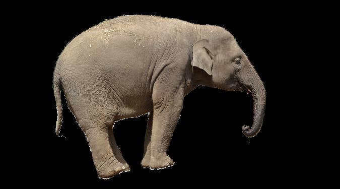 Elephant on a white background.