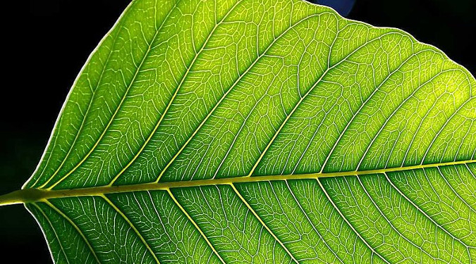 Close up of a Plant's Leaf