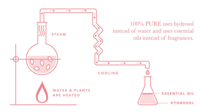 100 Pure uses hydrosols in a lot of their products. Here is a picture of the hydrosol process, which is a by product of essential oil distillation.